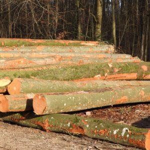 Brennholz lang, grünes Holz